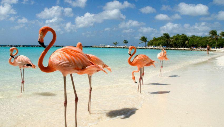 Cercasi direttore di fenicotteri: il lavoro da sogno alle Bahamas