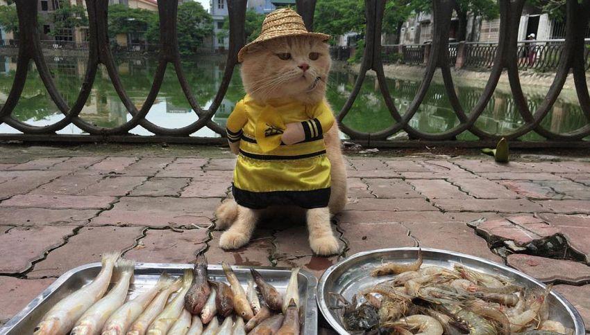 In Vietnam esiste un gatto che vende il pesce