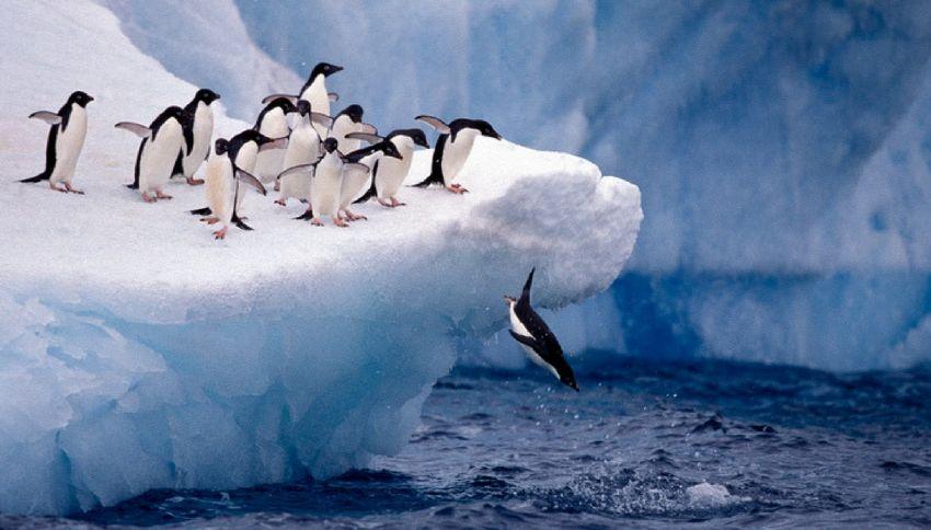 Antartide, scoperti pinguini che scappavano dal surriscaldamento