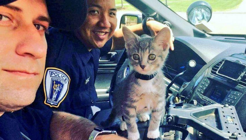 Ecco l'agente Donut: in Michigan arruolato un gatto poliziotto