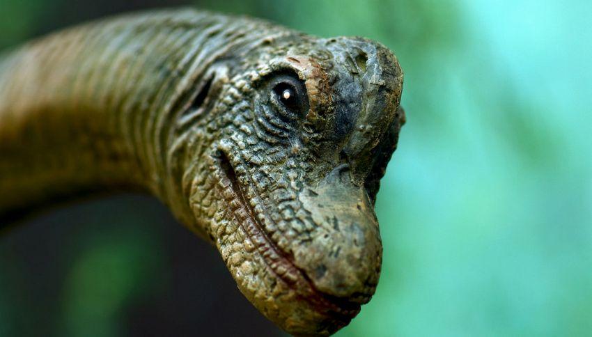 Sorpresa, anche i dinosauri avevano la forfora