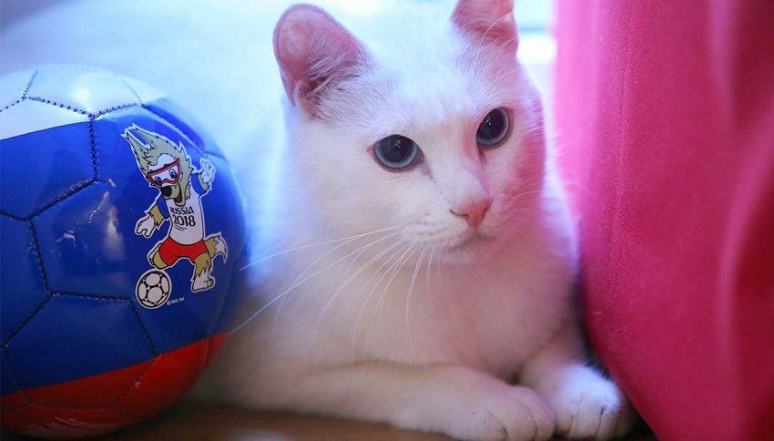 Il gatto Achille: l'oracolo ufficiale dei Mondiali in Russia 2018
