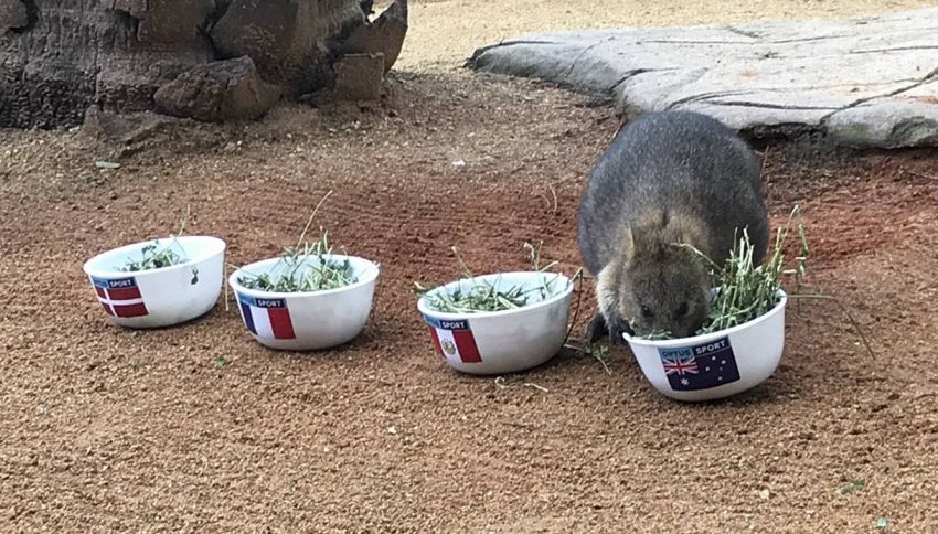Mondiali 2018, anche l'Australia ha il suo talismano: un quokka