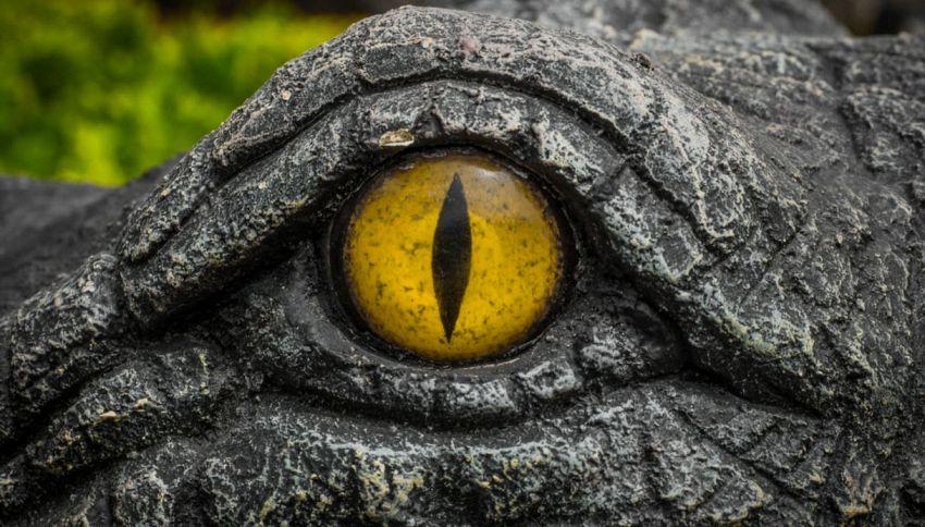 Sul litorale romano c'è un mistero grande come un coccodrillo