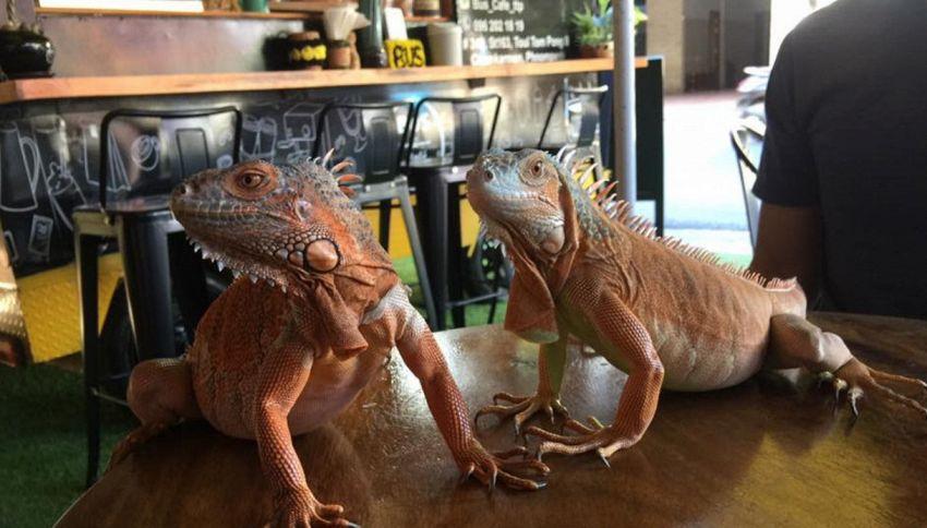 Metti un caffè col pitone e un drink con l'anaconda