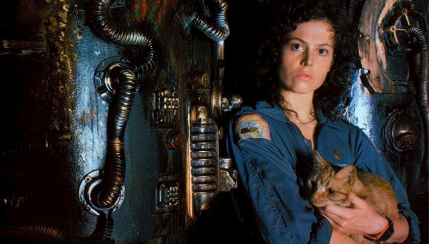 """Vi ricordate il gatto di """"Alien""""? Avrà uno spin-off solo per lui"""