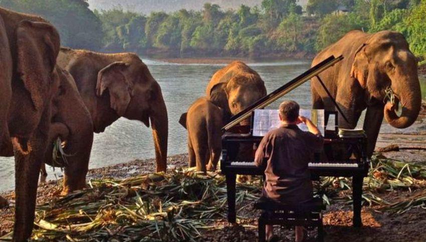 La storia di Paul Barton, l'uomo che suonava agli elefanti