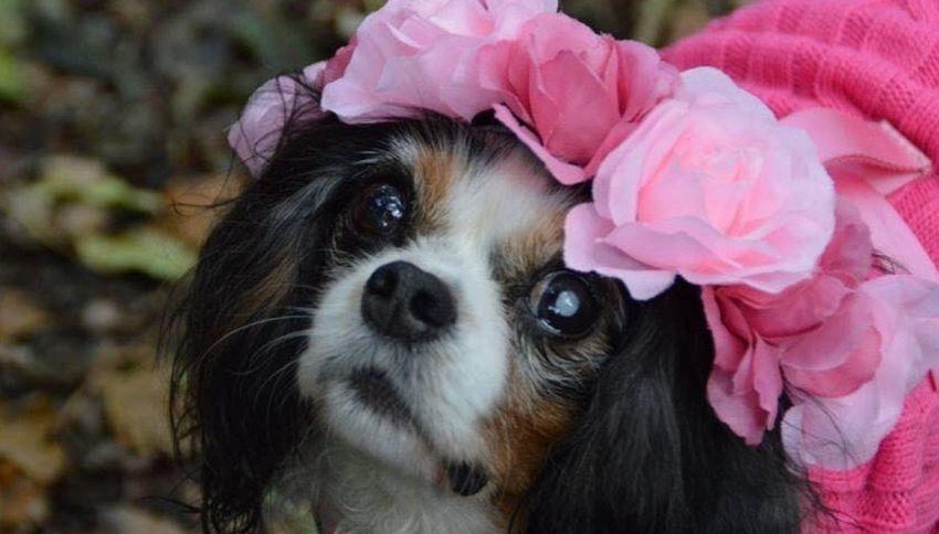 La storia di Lucy, il cane che ha fatto cambiare la legge in UK