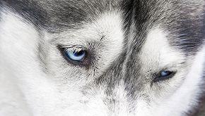 Cane piange e si dispera sulla tomba della sua padrona: il video