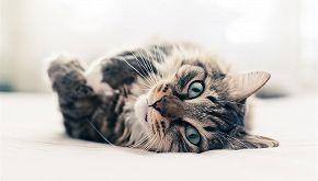 Storia di Alita, la gatta che ha adottato due cani orfani