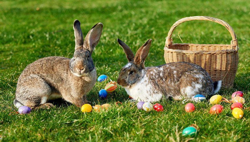 Quiz pasquale: vedi il pulcino nascosto tra le uova e i conigli?