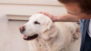 Pulisce se il cane sporca il marciapiede: non vedente premiato
