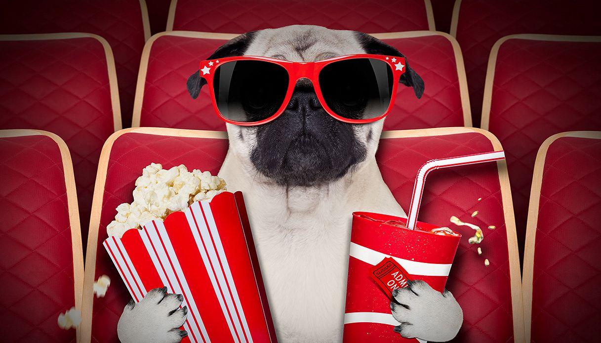 In questo cinema puoi vedere il film insieme al tuo cane