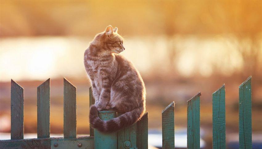Lasci il tuo gatto uscire di casa? Stai sbagliando