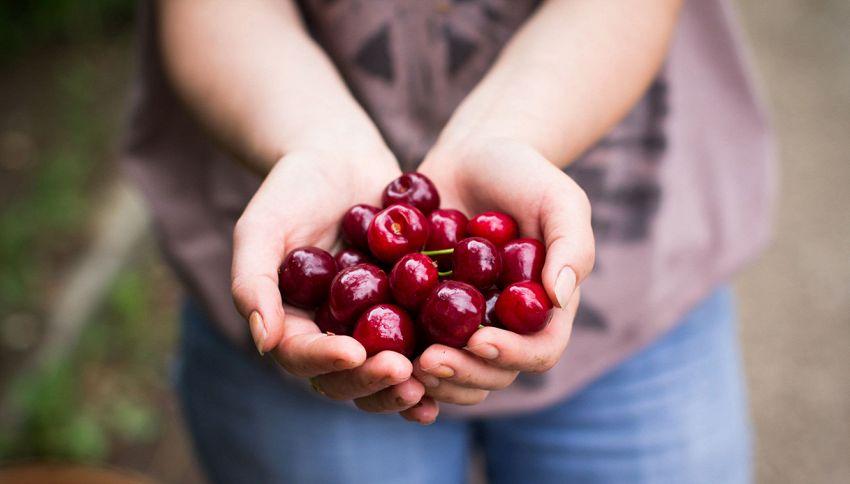 Eviti le ciliegie per paura di ingrassare? Sbagli se non le mangi
