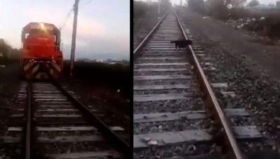 Cane incatenato sui binari. Macchinista ferma il treno e lo salva