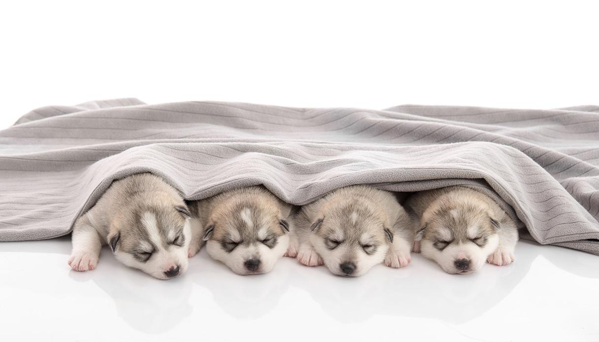 Cagnolini party: in questo hotel puoi festeggiare con 10 cuccioli