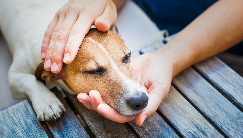 Accarezzi spesso il tuo cane? Fai bene #lodicelascienza