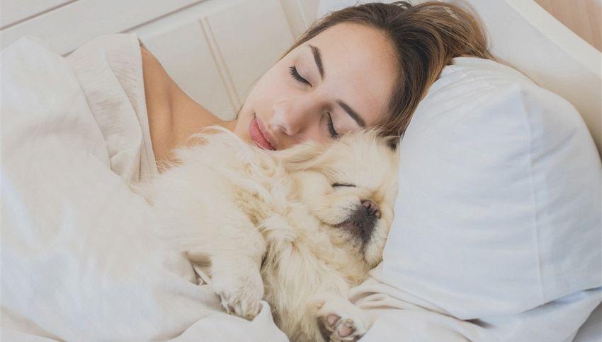 E' meglio dormire con il cane che con il partner #lodicelascienza