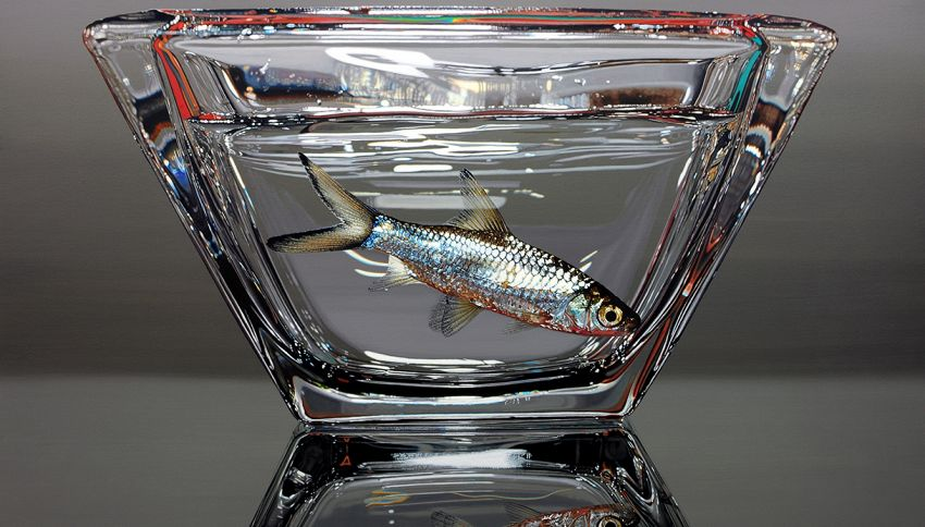 Pensi sia davvero un pesce quello che vedi? Incredibile illusione
