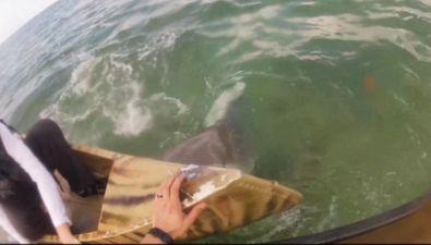 Panico in acqua: squalo aggredisce pescatori