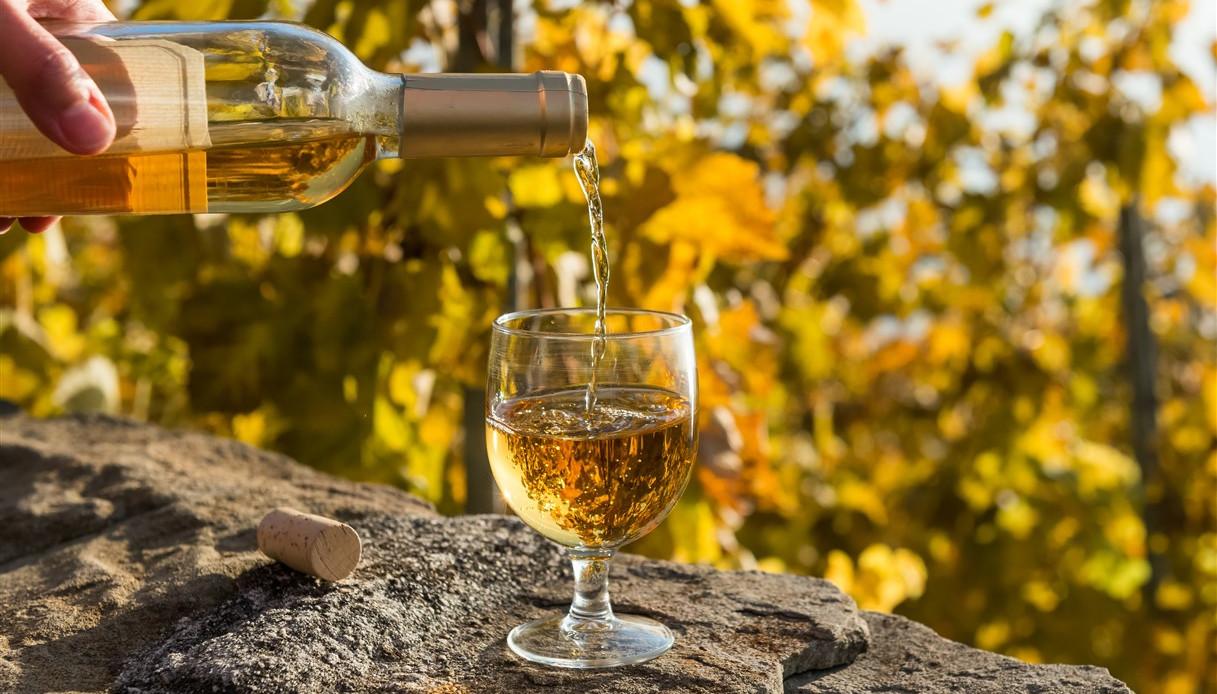 Bagnare Piante Con Bottiglie ti è avanzato del vino? gettalo nelle piante | supereva