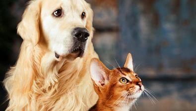 Perché sui social i gatti piacciono di più dei cani?
