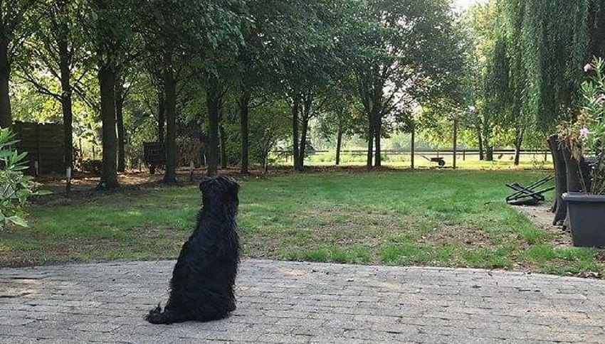 Il rifugio di Sasha, che salva i cani dai maltrattamenti