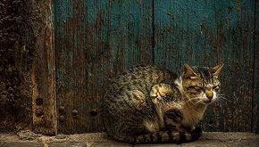 La storia del sindaco che accoglie a casa i gatti senzatetto