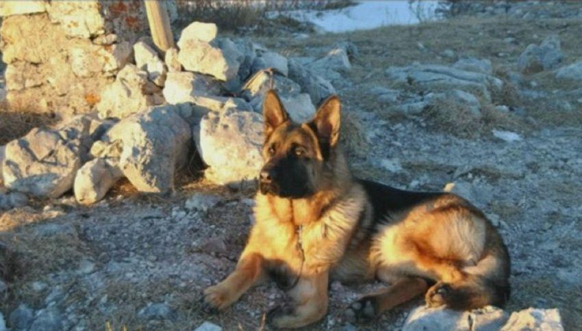 L'addio degli spacciatori a Rocky, cane antidroga del vicentino