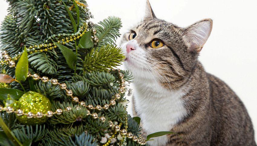 Come evitare che il gatto rovini l'albero di Natale