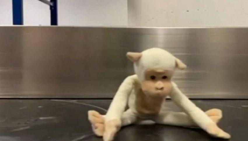I giocattoli smarriti in aeroporto esposti per tornare a casa