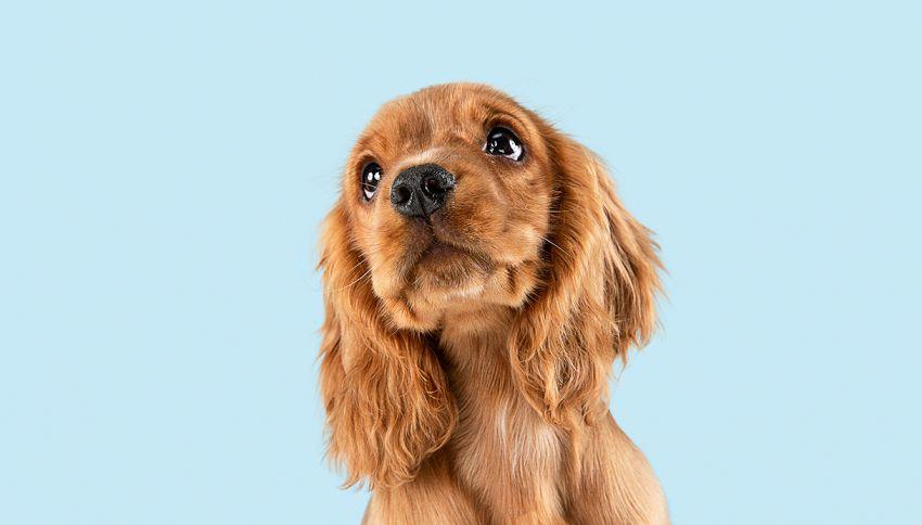 Il cucciolo dalle lunghe ciglia che sta conquistando Instagram