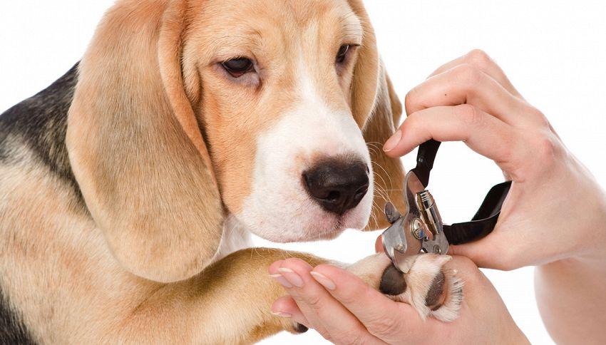 Dimentichi di tagliare le unghie al tuo cane? Stai sbagliando