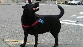 Eclipse, il cane che prende da solo il bus per andare al parco