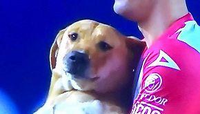 Invade il campo durante un match: il cane adottato dalla squadra