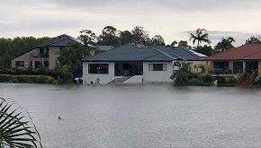 Australia, lo squalo che nuota tra le case fa il giro del web