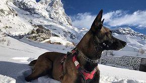 Sedici giorni sul Cervino: cane soccorritore sopravvive