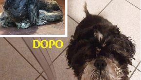 Birillo: la storia del cane senza volto con una seconda vita