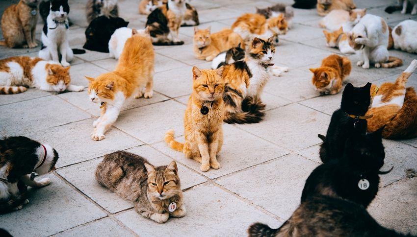 Sono i gatti più viziati al mondo: ecco l'incredibile storia