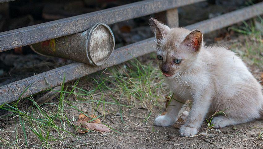 Ritrova la sua gatta grazie ai volantini ma ora rischia la multa