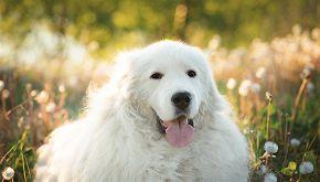 Cane nel Lambro: è salvo grazie all'intervento di un dog sitter