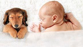 Kayden e Brutus: l'amicizia speciale tra un bimbo e il suo cane