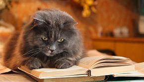 Topo da biblioteca? C'è un gatto influencer bibliotecario