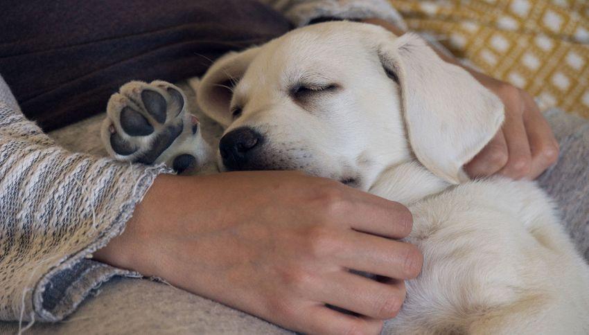 Cosa sognano i cani quando dormono? La risposta ti commuoverà