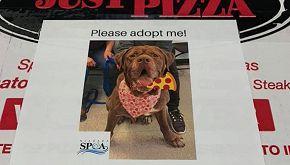 L'iniziativa di una pizzeria: sui cartoni i cani da adottare