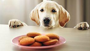 Una pasticceria per aiutare i cani e i gatti randagi