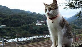 In Inghilterra c'è un gatto che accoglie i passeggeri in stazione