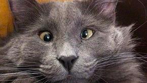 Belarus, il gatto strabico che ha conquistato il web