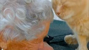 Smarrisce il gatto durante il terremoto e lo ritrova dopo 3 anni